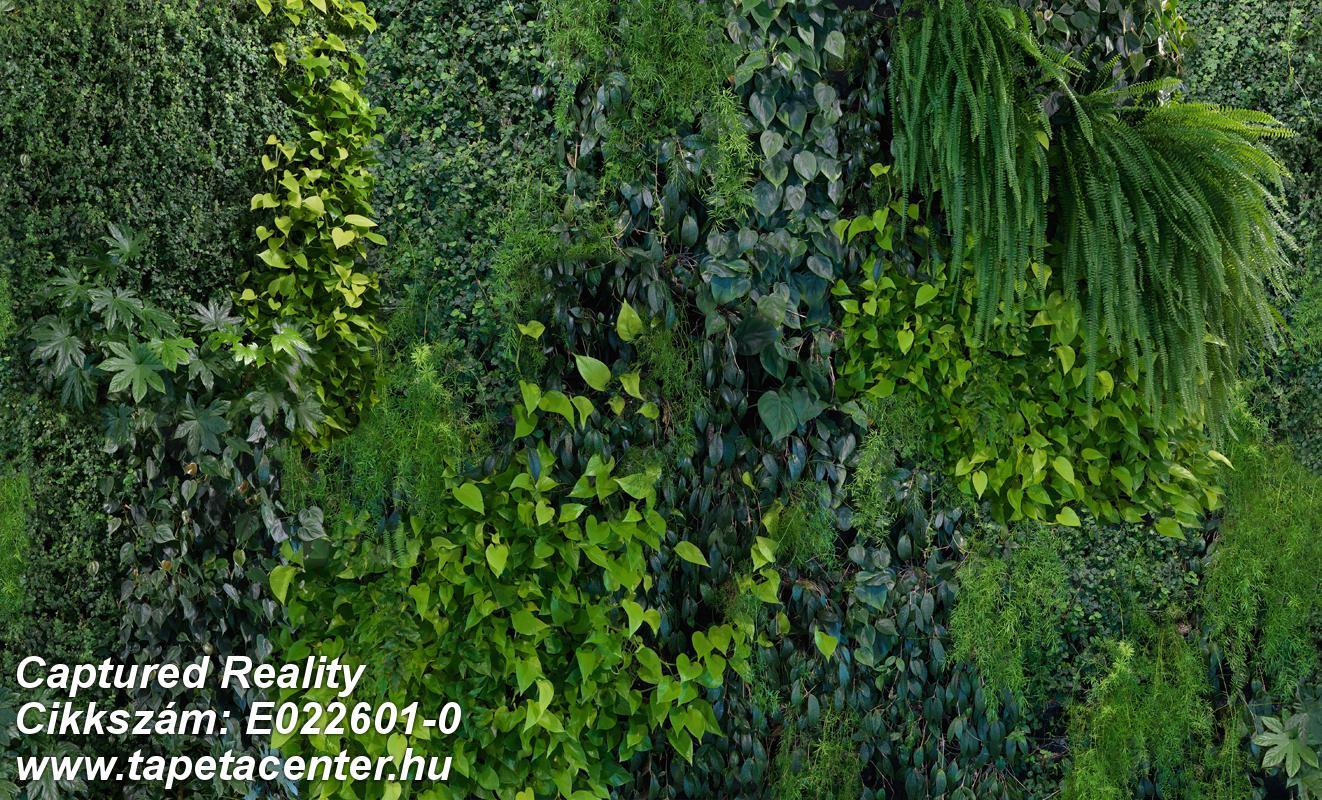 3d hatású,fa hatású-fa mintás,fotórealisztikus,különleges motívumos,retro,természeti mintás,fekete,szürke,zöld,gyengén mosható,vlies poszter, fotótapéta