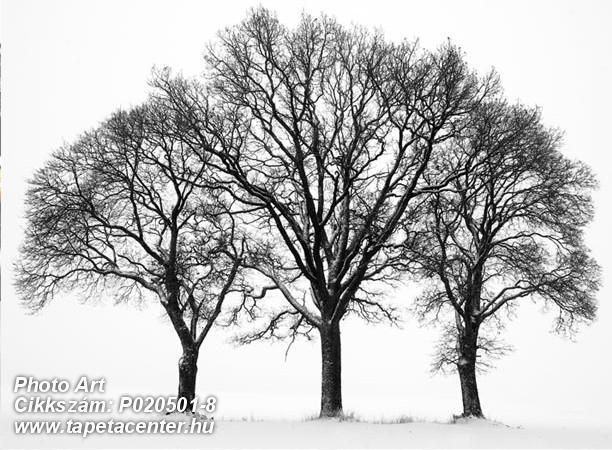 3d hatású,fa hatású-fa mintás,fotórealisztikus,különleges motívumos,retro,tájkép,természeti mintás,fehér,fekete,gyengén mosható,vlies poszter, fotótapéta
