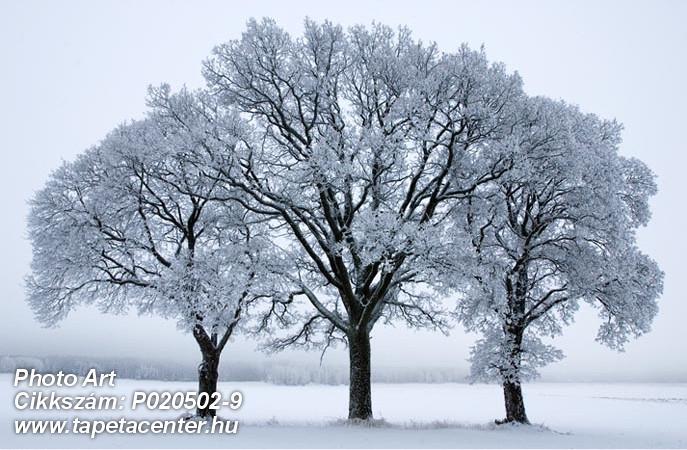 3d hatású,fa hatású-fa mintás,fotórealisztikus,különleges motívumos,retro,természeti mintás,fehér,fekete,kék,gyengén mosható,vlies poszter, fotótapéta