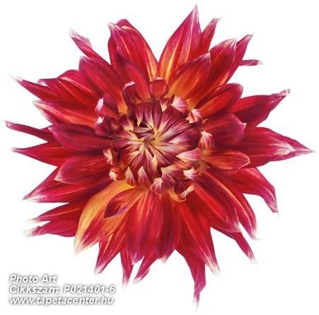 3d hatású,különleges motívumos,retro,természeti mintás,virágmintás,fehér,piros-bordó,sárga,gyengén mosható,vlies poszter, fotótapéta