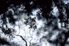 3d hatású,fotórealisztikus,természeti mintás,fehér,fekete,kék,gyengén mosható,vlies poszter, fotótapéta