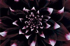 3d hatású,fotórealisztikus,természeti mintás,virágmintás,fekete,lila,pink-rózsaszín,piros-bordó,gyengén mosható,vlies poszter, fotótapéta