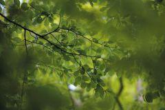 3d hatású,fa hatású-fa mintás,fotórealisztikus,különleges motívumos,barna,zöld,gyengén mosható,vlies poszter, fotótapéta