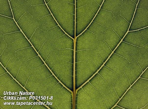 Fa hatású-fa mintás,különleges motívumos,természeti mintás,virágmintás,zöld,gyengén mosható,vlies poszter, fotótapéta