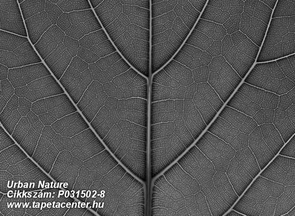 Fa hatású-fa mintás,különleges motívumos,természeti mintás,fekete,szürke,gyengén mosható,vlies poszter, fotótapéta